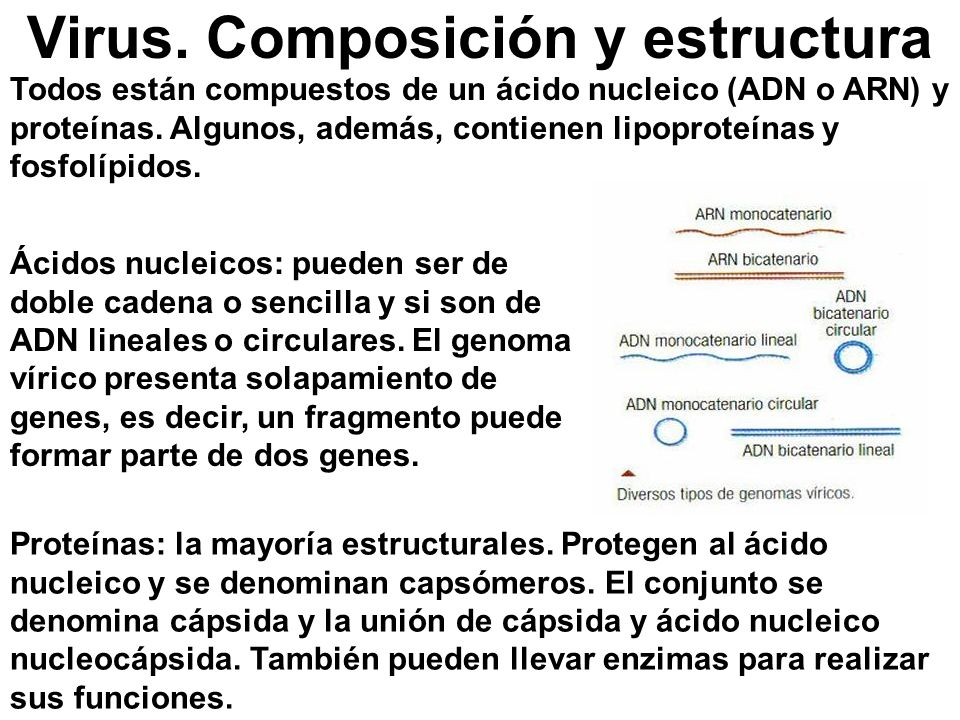 Virus. Composición y estructura Todos están compuestos de un ácido nucleico (ADN o ARN) y proteínas. Algunos, además, contienen lipoproteínas y fosfol