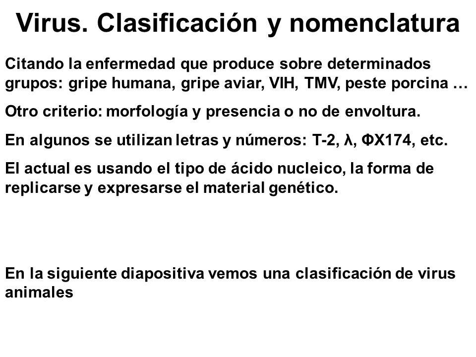 Virus. Clasificación y nomenclatura Citando la enfermedad que produce sobre determinados grupos: gripe humana, gripe aviar, VIH, TMV, peste porcina …
