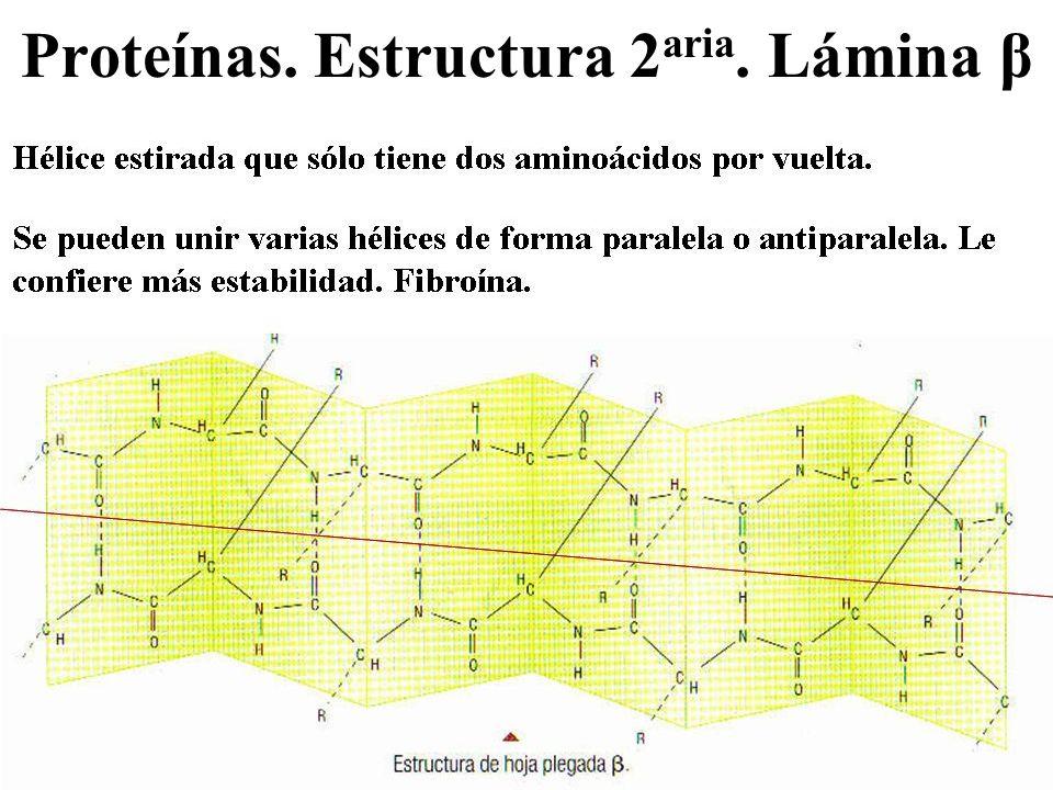 Proteínas. Estructura 2 aria. Lámina β