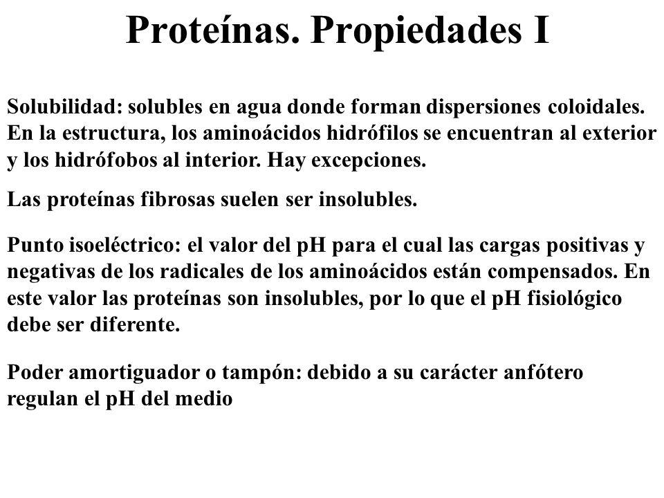 Proteínas. Propiedades I Solubilidad: solubles en agua donde forman dispersiones coloidales. En la estructura, los aminoácidos hidrófilos se encuentra