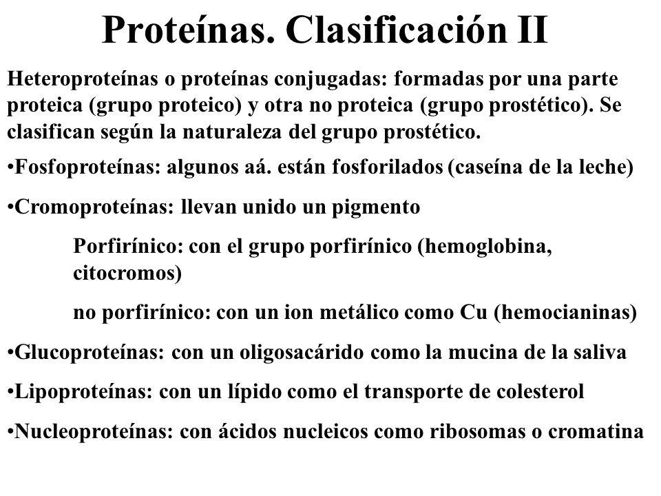 Proteínas. Clasificación II Heteroproteínas o proteínas conjugadas: formadas por una parte proteica (grupo proteico) y otra no proteica (grupo prostét