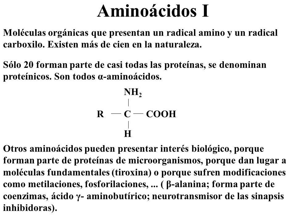Enzimas.Naturaleza y acción La mayoría son proteínas globulares y conjugadas o heteroproteínas.