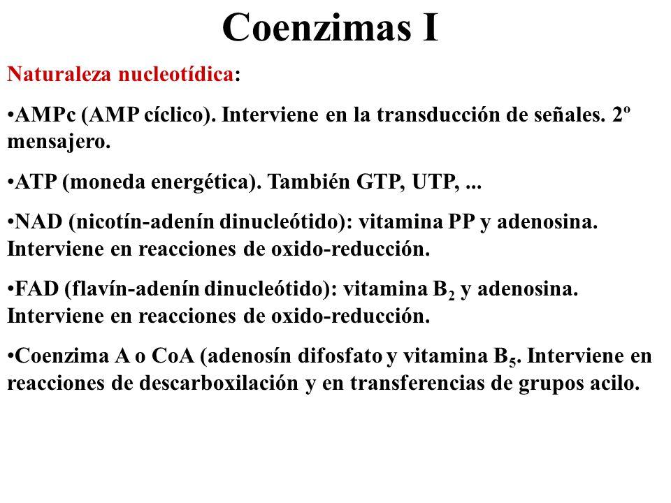 Coenzimas I Naturaleza nucleotídica: AMPc (AMP cíclico). Interviene en la transducción de señales. 2º mensajero. ATP (moneda energética). También GTP,
