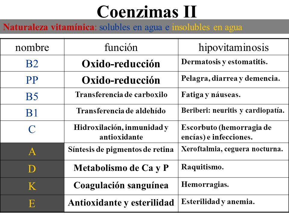 Coenzimas II Naturaleza vitamínica: solubles en agua e insolubles en agua nombrefunciónhipovitaminosis B2Oxido-reducción Dermatosis y estomatitis. PPO