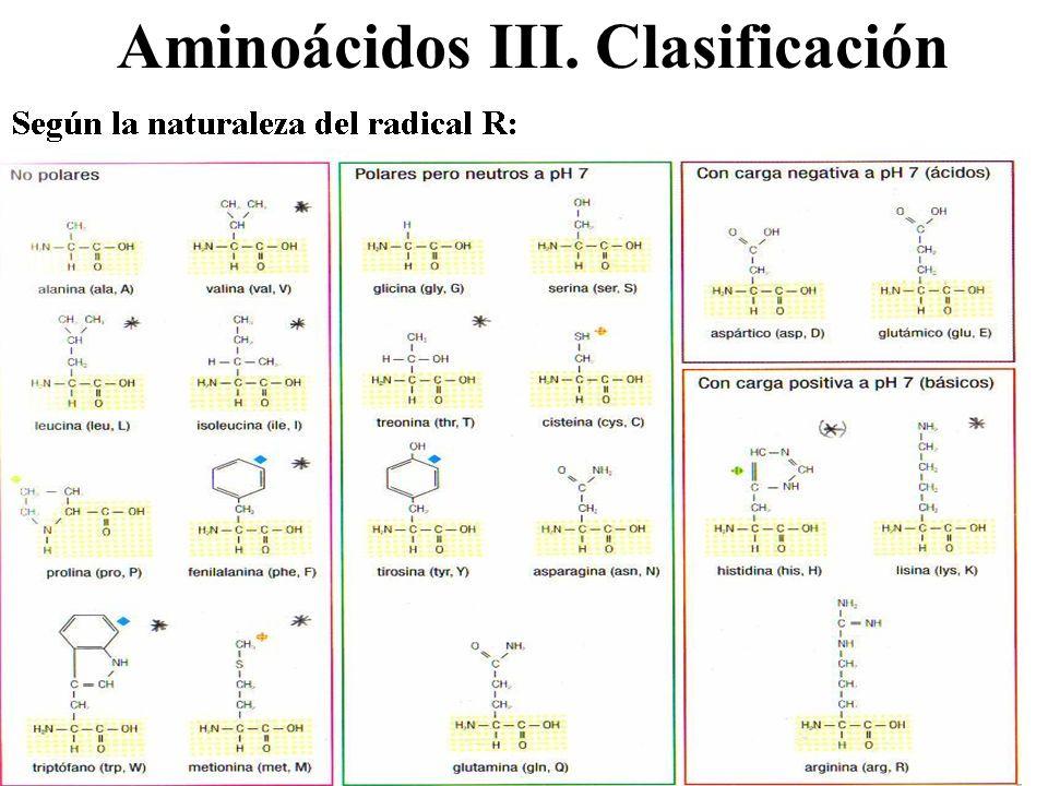 Aminoácidos III. Clasificación