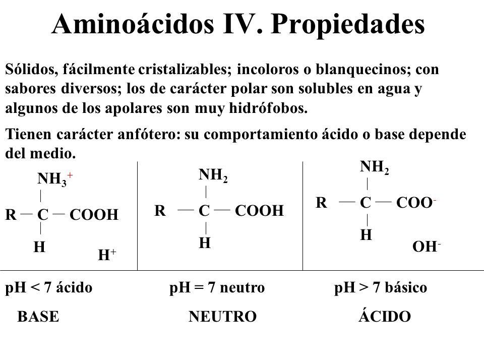 Aminoácidos IV. Propiedades Sólidos, fácilmente cristalizables; incoloros o blanquecinos; con sabores diversos; los de carácter polar son solubles en