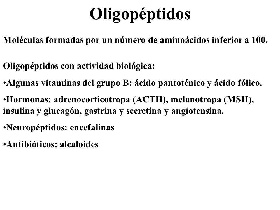 Oligopéptidos Moléculas formadas por un número de aminoácidos inferior a 100. Oligopéptidos con actividad biológica: Algunas vitaminas del grupo B: ác