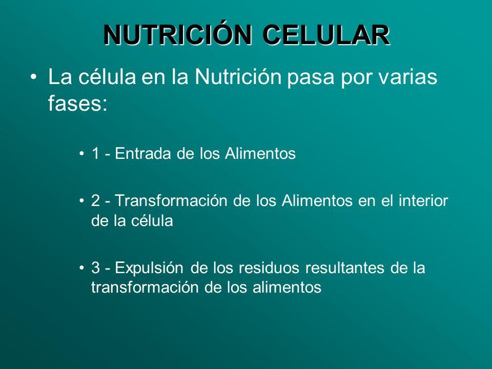 NUTRICIÓN CELULAR La célula en la Nutrición pasa por varias fases: 1 - Entrada de los Alimentos 2 - Transformación de los Alimentos en el interior de