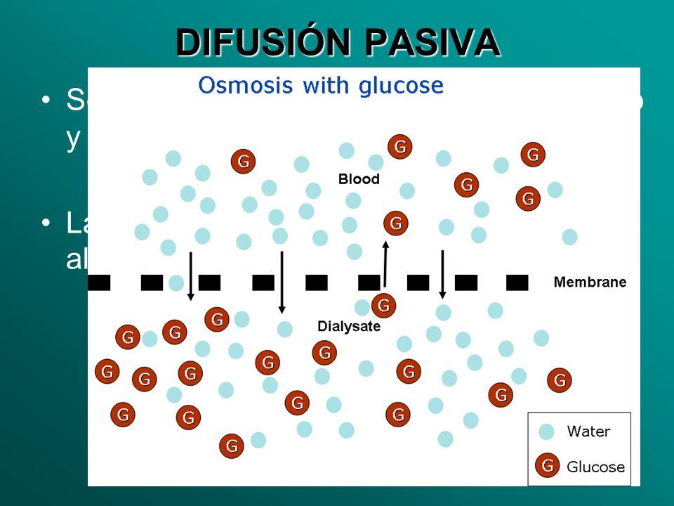 DIFUSIÓN PASIVA Se produce cuando el alimento es pequeño y abundante en el medio. La célula no gasta energía para que el alimento entre