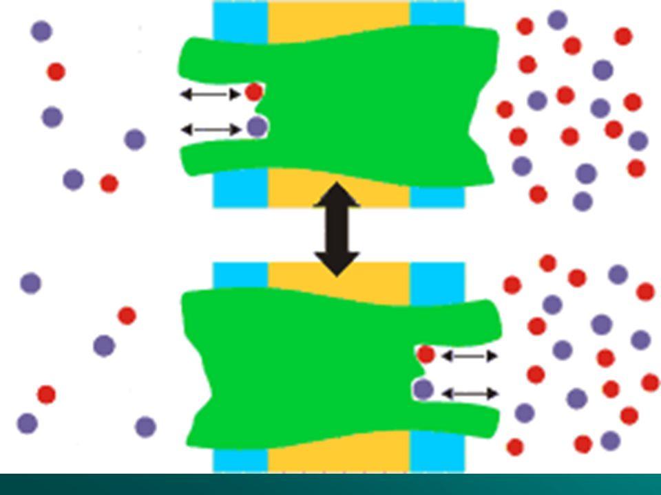 TRANSPORTE ACTIVO Se produce cuando el alimento es de pequeño tamaño, pero es escaso en el medio. La célula tiene que gastar energía en su entrada Se