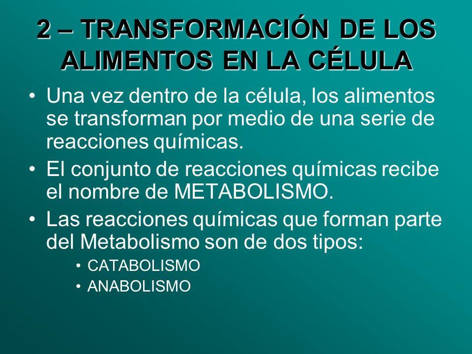 2 – TRANSFORMACIÓN DE LOS ALIMENTOS EN LA CÉLULA Una vez dentro de la célula, los alimentos se transforman por medio de una serie de reacciones químic