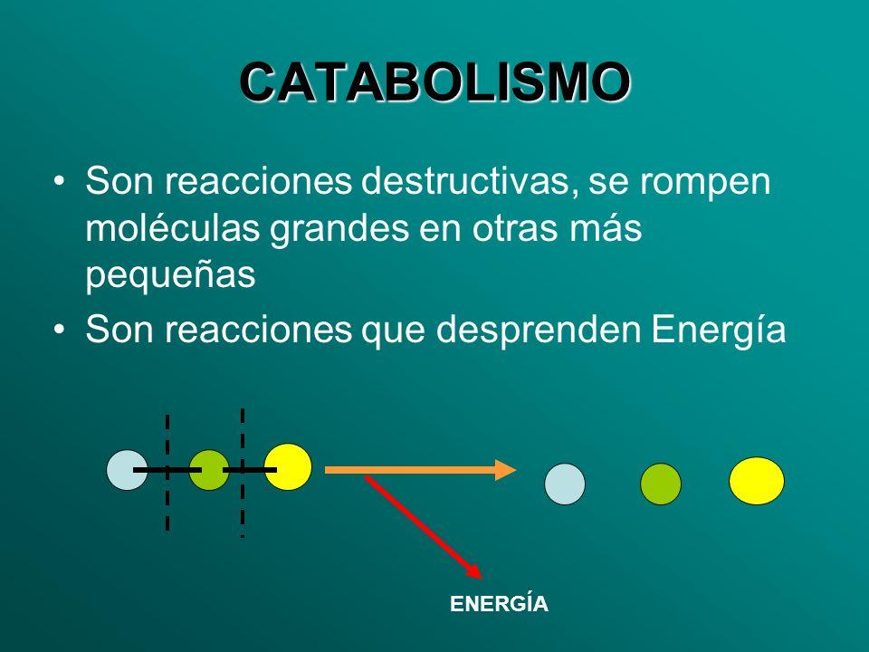 CATABOLISMO Son reacciones destructivas, se rompen moléculas grandes en otras más pequeñas Son reacciones que desprenden Energía ENERGÍA