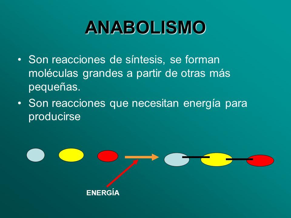 ANABOLISMO Son reacciones de síntesis, se forman moléculas grandes a partir de otras más pequeñas. Son reacciones que necesitan energía para producirs