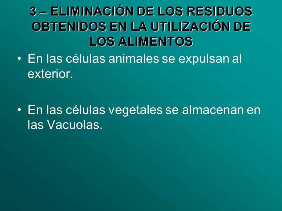 3 – ELIMINACIÓN DE LOS RESIDUOS OBTENIDOS EN LA UTILIZACIÓN DE LOS ALIMENTOS En las células animales se expulsan al exterior. En las células vegetales