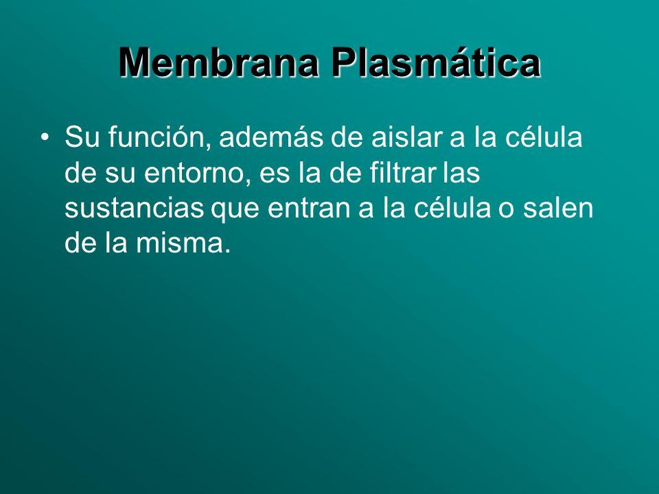 Membrana Plasmática Su función, además de aislar a la célula de su entorno, es la de filtrar las sustancias que entran a la célula o salen de la misma