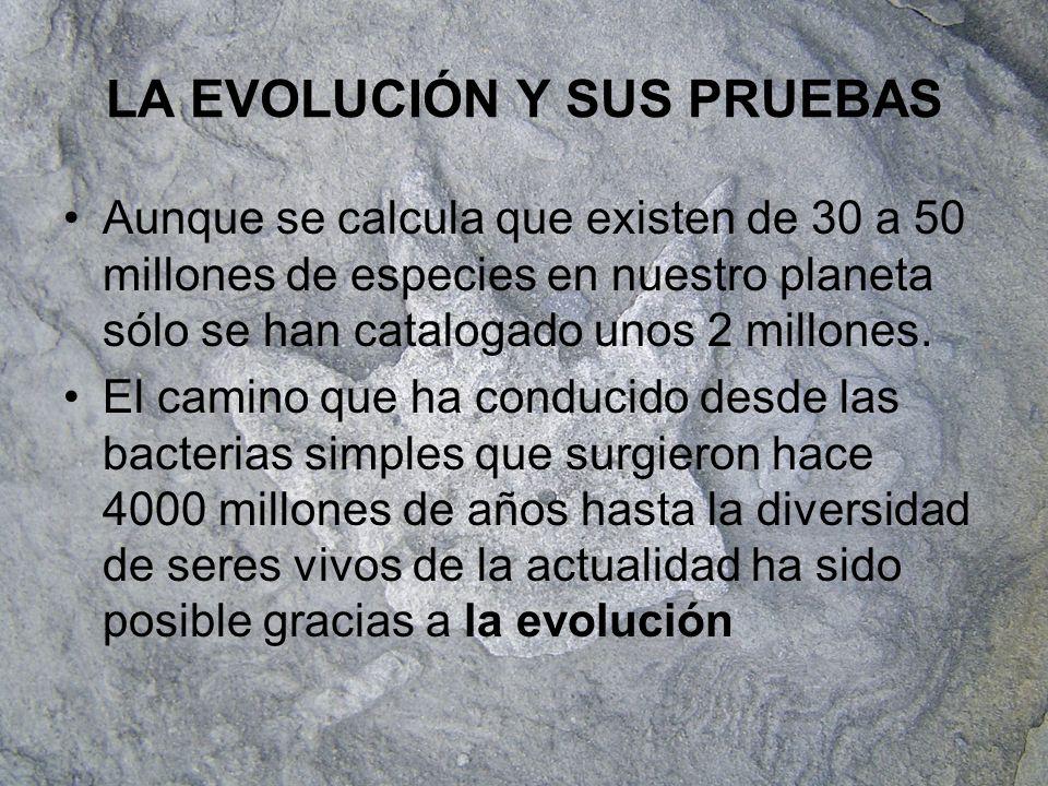 Pruebas de la evolución Existen tres tipos de pruebas: –Pruebas biológicas que se basan en organismos actuales –Pruebas paleontológicas que se basan en el estudio de fósiles –Pruebas moleculares que se basan en estudios genéticos