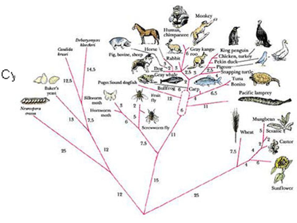 ¿Cómo se explica la evolución.Las especies pueden evolucionar unas a partir de otras.