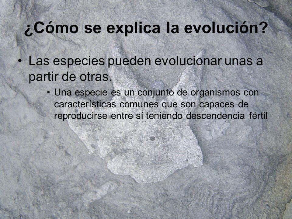 Historia de las teorías evolutivas El FIJISMO –Hasta el siglo XVIII se pensaba que no había habido cambios en los seres vivos que existían en La Tierra.