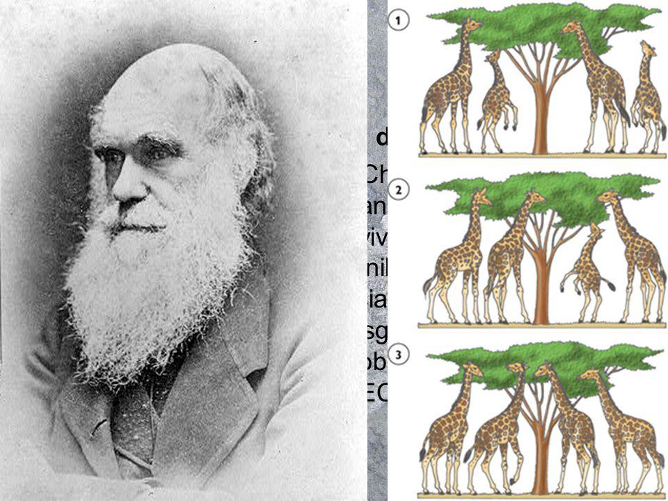 Los descendientes eran semejantes a sus progenitores pero no exactamente iguales poseían variabilidad.