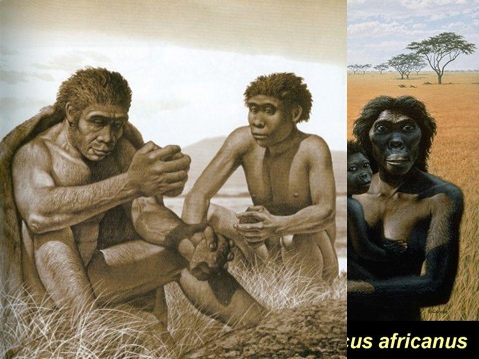 Hace 1,2 millones de años aparece el primer homínido con características bípedas parecidas al hombre actual, además domina el fuego: Homo erectus Los últimos homínidos (ambos Homo sapiens, es decir humanos) son el Homo sapiens neanderthalensis y el homo sapiens sapiens coexisten en Europa