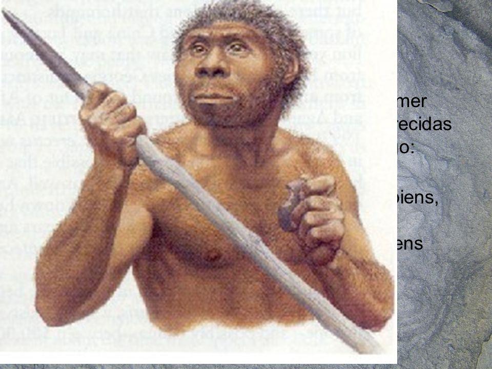 El homo sapiens neanderthalensis adaptado al frío de las glaciaciones apareció hace 200.000 años y se extendió fundamentalmente por Europa desapareciendo hace aproximadamente 25.000 años El homo sapiens sapiens apareció en África hace 100.000 años y es la única especie superviviente del género Homo.