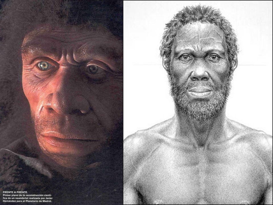 El homo sapiens neanderthalensis adaptado al frío de las glaciaciones apareció hace 200.000 años y se extendió fundamentalmente por Europa desaparecie
