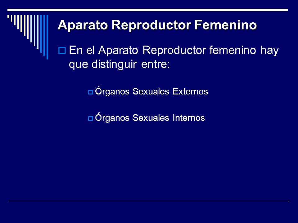 Aparato Reproductor Femenino En el Aparato Reproductor femenino hay que distinguir entre: Órganos Sexuales Externos Órganos Sexuales Internos