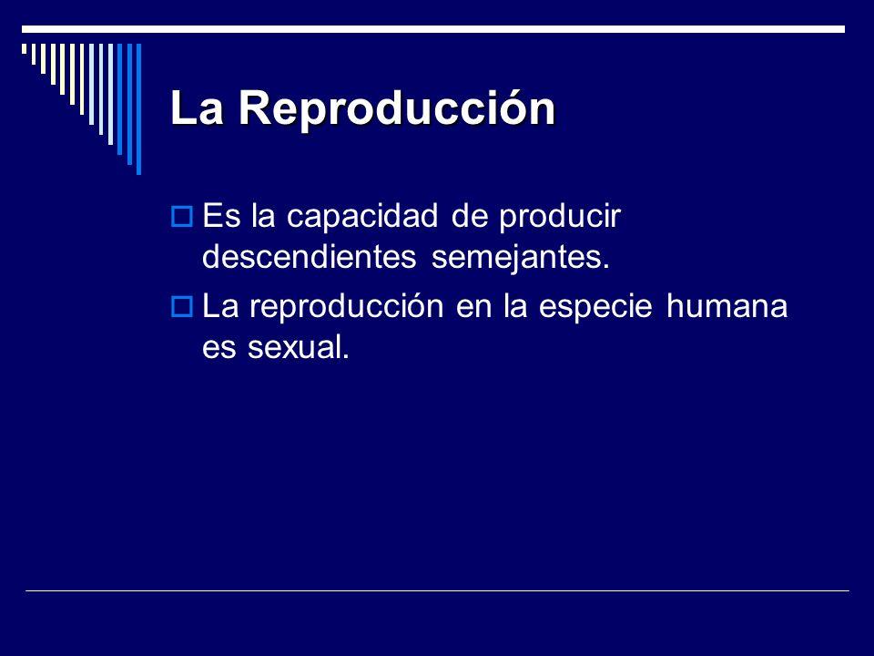 La Reproducción Es la capacidad de producir descendientes semejantes. La reproducción en la especie humana es sexual.