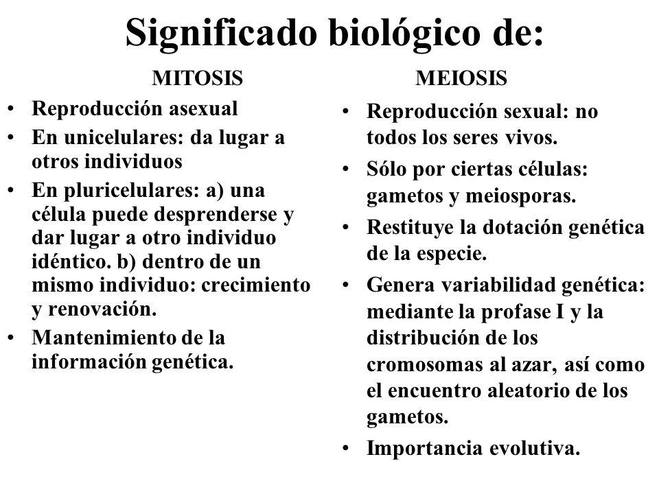 Significado biológico de: Reproducción asexual En unicelulares: da lugar a otros individuos En pluricelulares: a) una célula puede desprenderse y dar