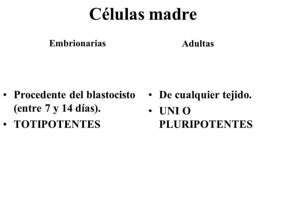 Células madre Procedente del blastocisto (entre 7 y 14 días). TOTIPOTENTES De cualquier tejido. UNI O PLURIPOTENTES Embrionarias Adultas