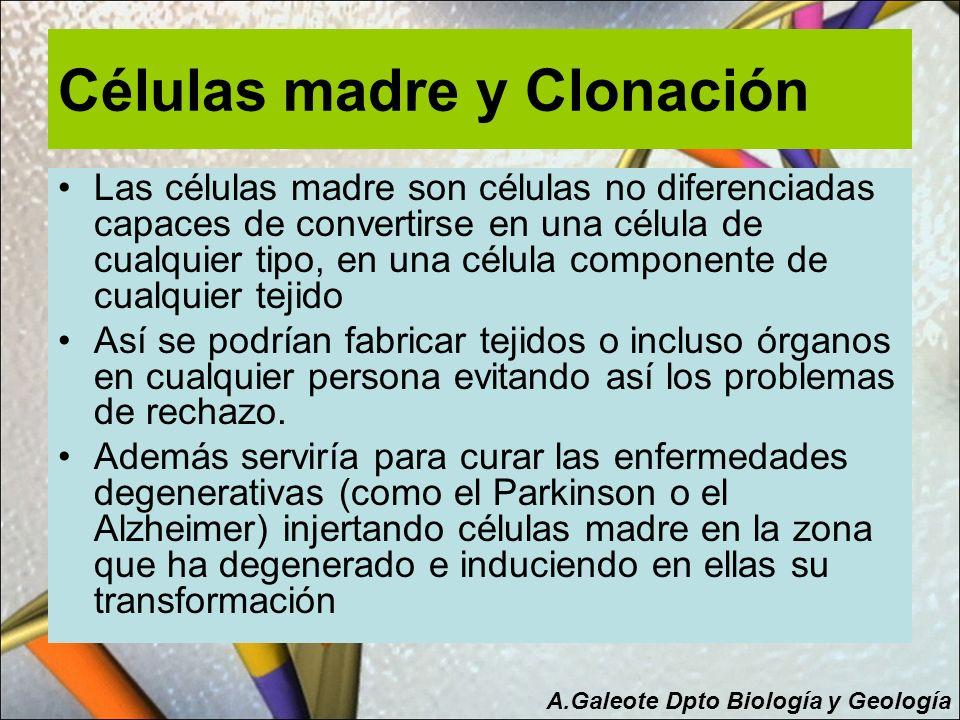 Células madre y Clonación Las células madre son células no diferenciadas capaces de convertirse en una célula de cualquier tipo, en una célula compone