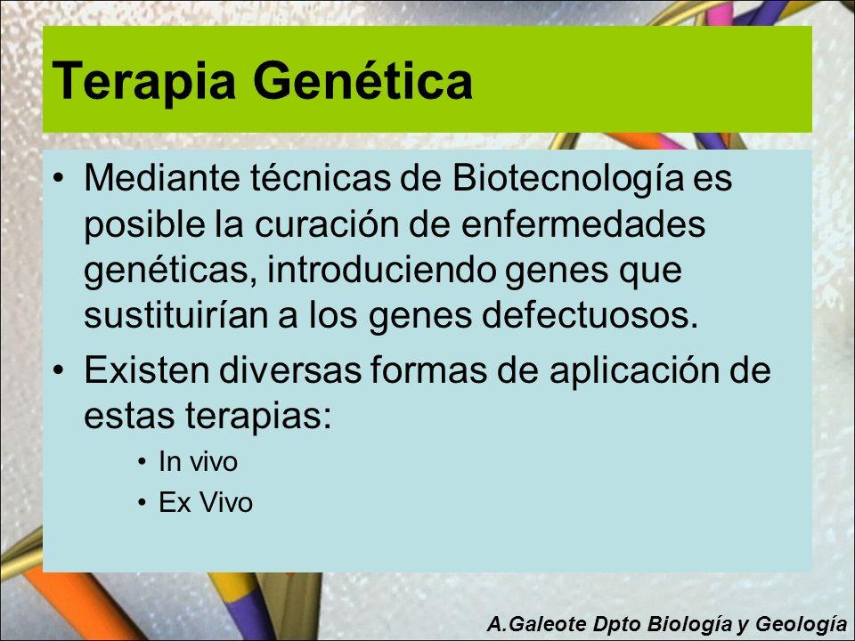 Terapia Genética Mediante técnicas de Biotecnología es posible la curación de enfermedades genéticas, introduciendo genes que sustituirían a los genes