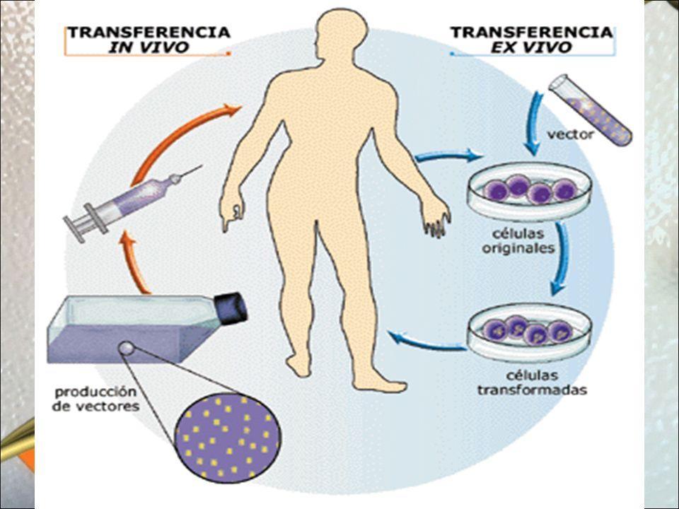 Identificación Genética Mediante la utilización de técnicas de Biotecnología (=Ingeniería Genética) se pueden determinar Huellas Genéticas que permiten la identificación de delincuentes en Medicina Forense.