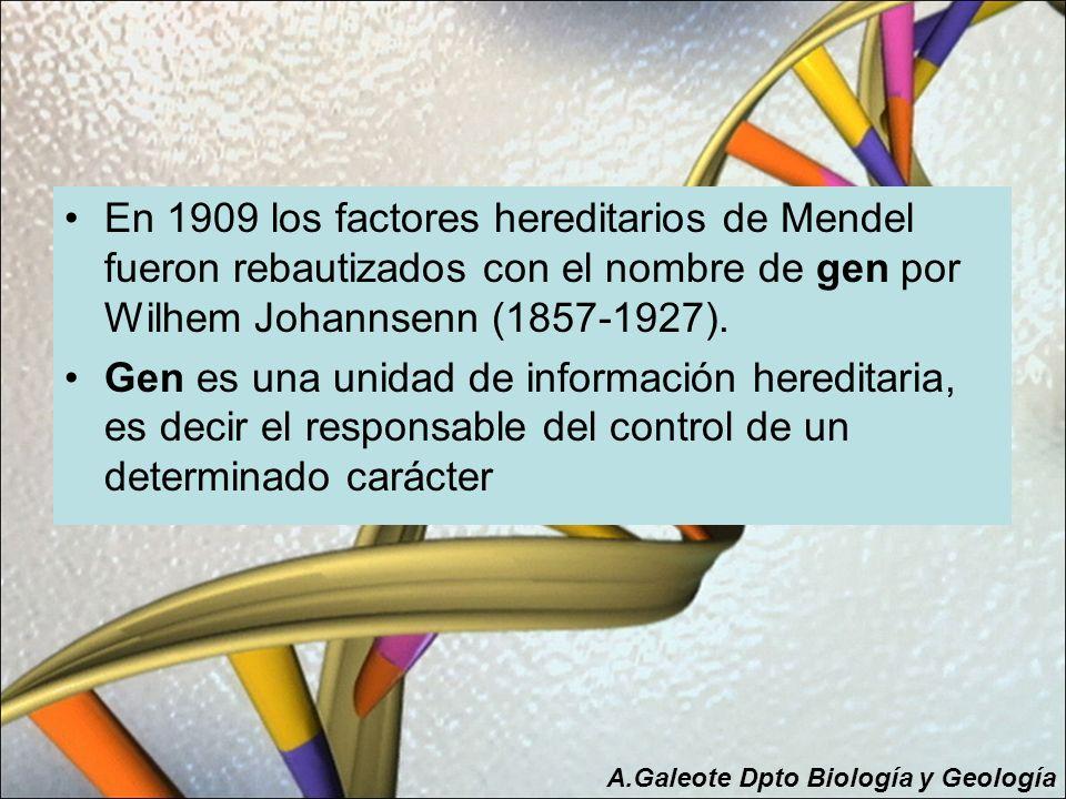 En 1909 los factores hereditarios de Mendel fueron rebautizados con el nombre de gen por Wilhem Johannsenn (1857-1927). Gen es una unidad de informaci