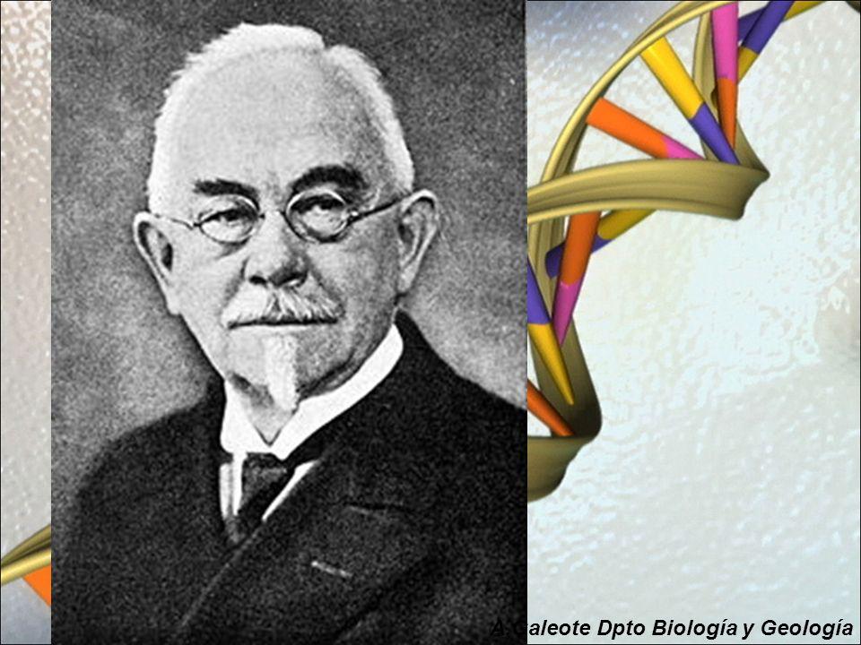 Una vez definido el concepto de GEN y su función quedaba por ver: ¿Dónde estaban los genes?.