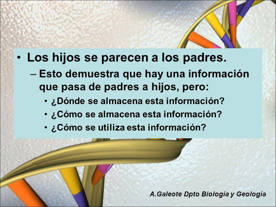 Los hijos se parecen a los padres. –Esto demuestra que hay una información que pasa de padres a hijos, pero: ¿Dónde se almacena esta información? ¿Cóm