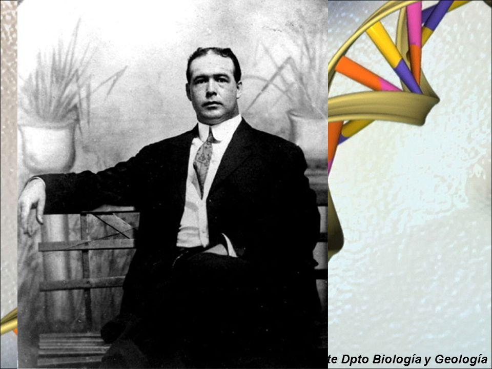 ¿De qué están hechos los genes y cómo se copian.