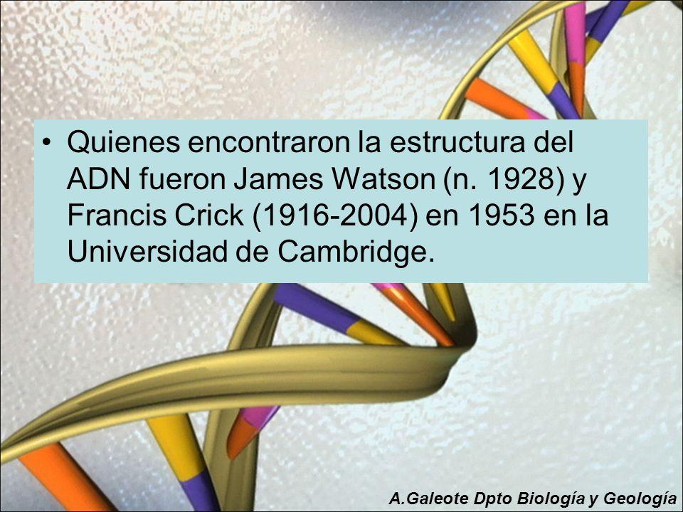 Quienes encontraron la estructura del ADN fueron James Watson (n. 1928) y Francis Crick (1916-2004) en 1953 en la Universidad de Cambridge. A.Galeote