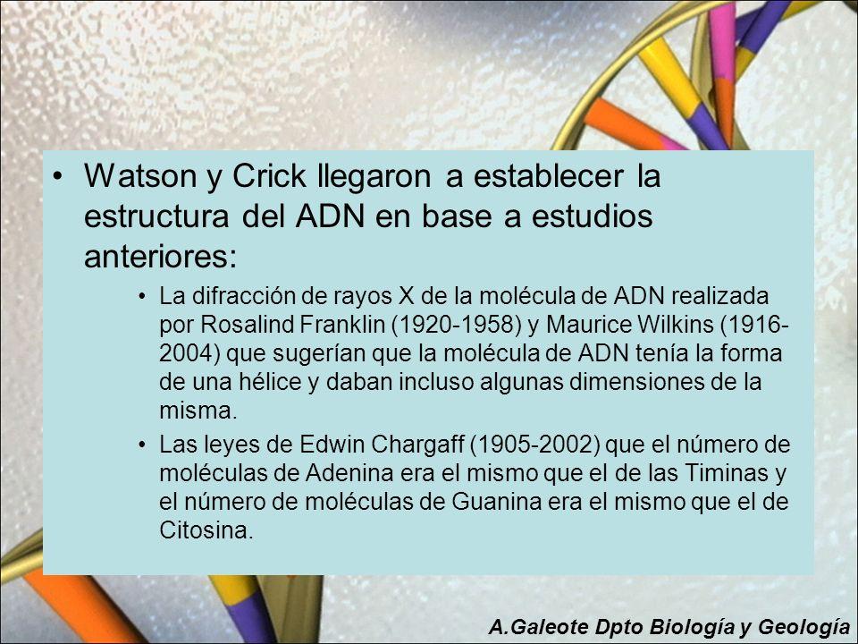Watson y Crick llegaron a establecer la estructura del ADN en base a estudios anteriores: La difracción de rayos X de la molécula de ADN realizada por