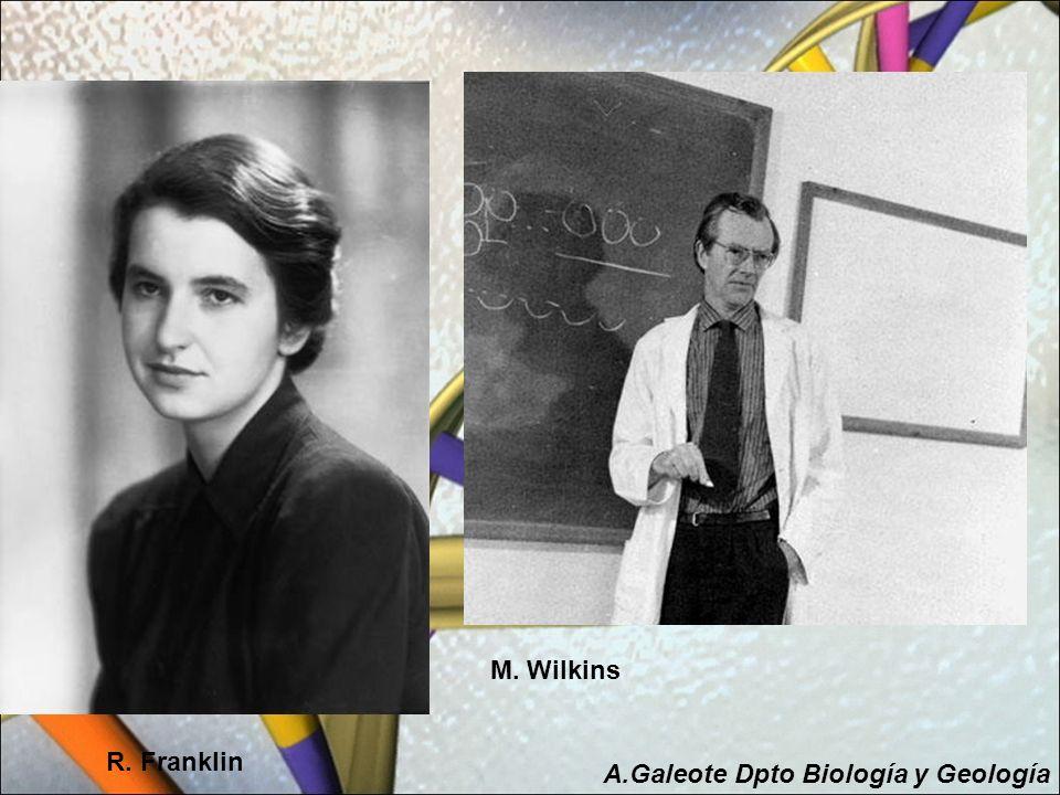 R. Franklin M. Wilkins A.Galeote Dpto Biología y Geología