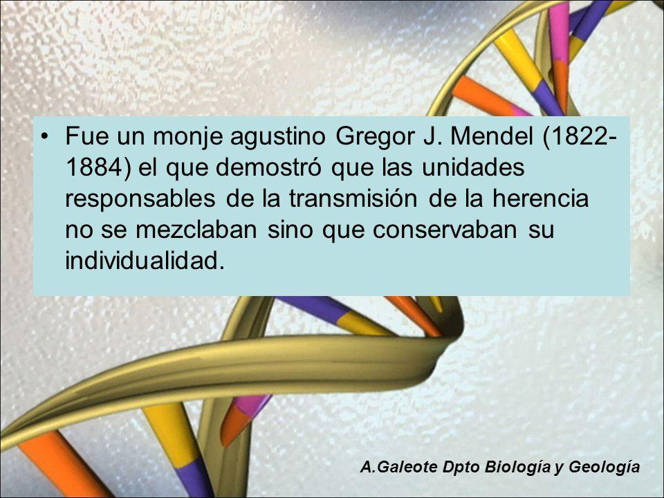 Fue un monje agustino Gregor J. Mendel (1822- 1884) el que demostró que las unidades responsables de la transmisión de la herencia no se mezclaban sin
