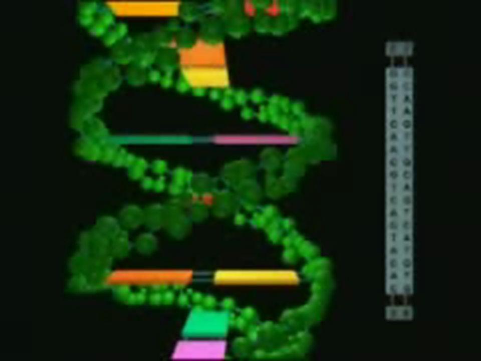 Si la información del ARNm (que antes estaba contenida en el GEN: en el ADN) está contenida en la secuencia de bases (Adenina, Guanina, Citosina o Uracilo) Y la Proteína que va a hacer posible esa información sintetizada en el Ribosoma es una secuencia de Amino-Ácidos (de los 20 posibles existentes) Debe haber una relación entre la secuencia de bases del ARNm y la secuencia de amino- ácidos de la Proteína A.Galeote Dpto Biología y Geología