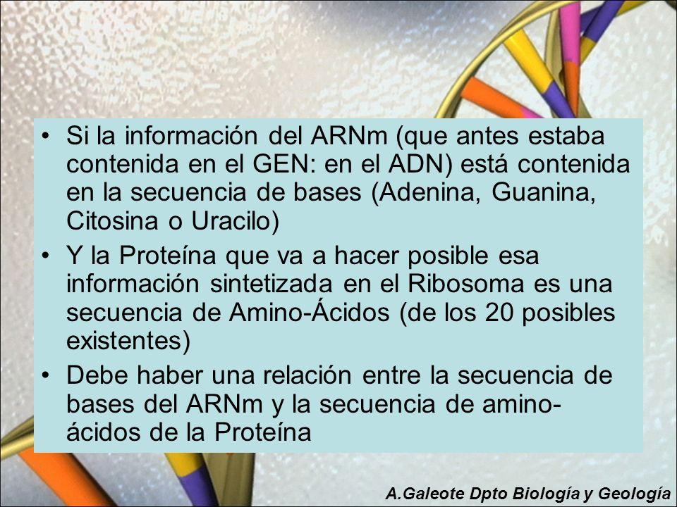 Si la información del ARNm (que antes estaba contenida en el GEN: en el ADN) está contenida en la secuencia de bases (Adenina, Guanina, Citosina o Ura