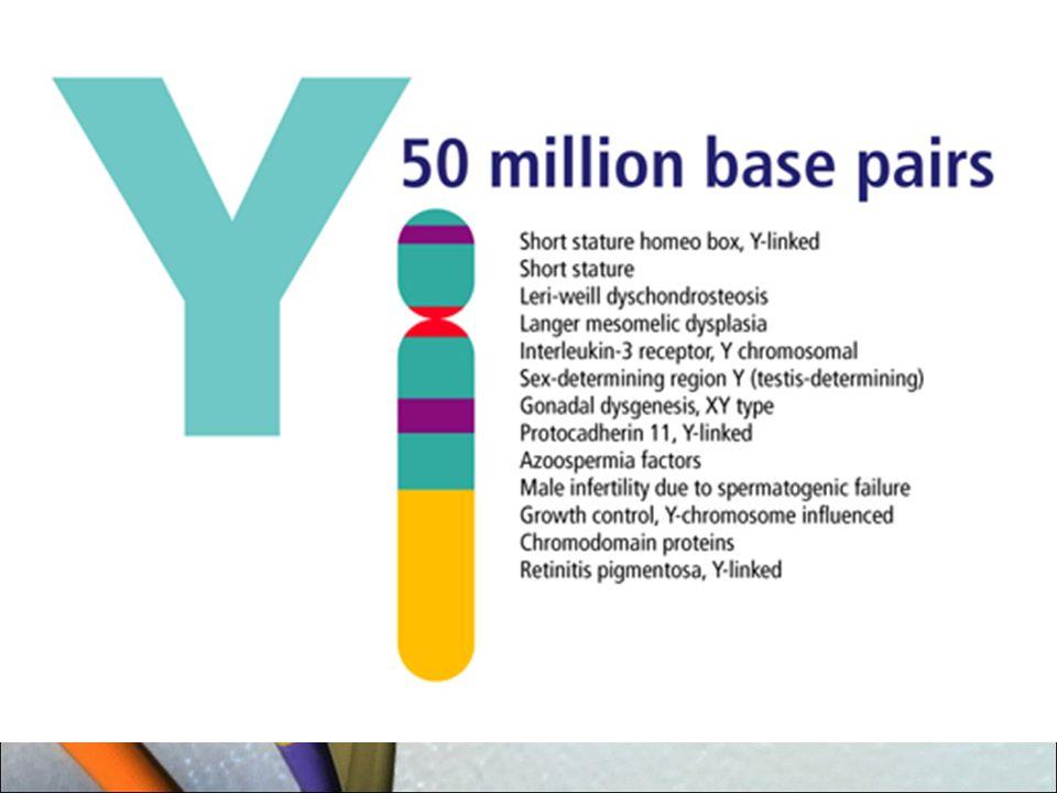 En el ser humano hay 23.000 genes.Los genes sólo representan el 2% del genoma.