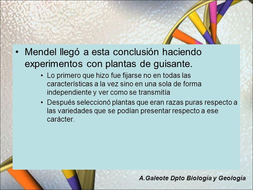Mendel llegó a esta conclusión haciendo experimentos con plantas de guisante. Lo primero que hizo fue fijarse no en todas las características a la vez