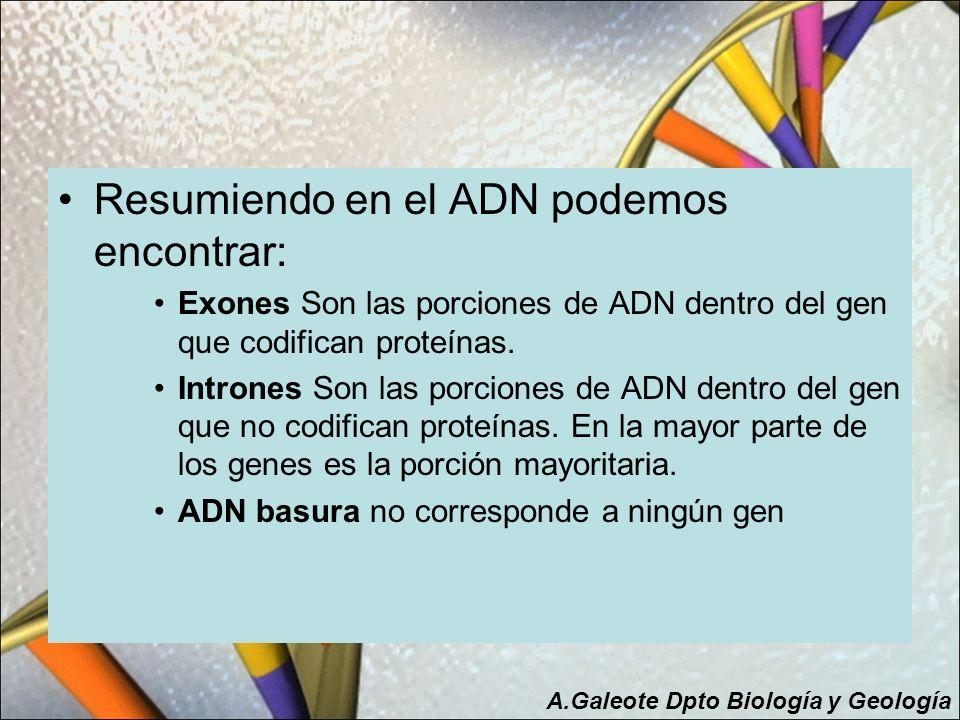 Resumiendo en el ADN podemos encontrar: Exones Son las porciones de ADN dentro del gen que codifican proteínas. Intrones Son las porciones de ADN dent
