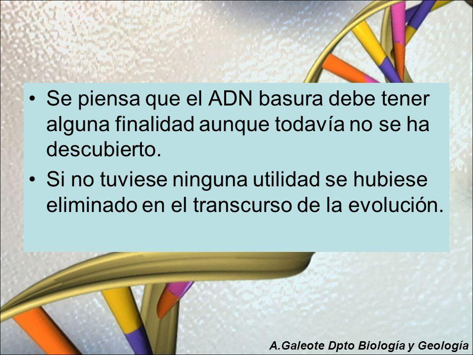 Se piensa que el ADN basura debe tener alguna finalidad aunque todavía no se ha descubierto. Si no tuviese ninguna utilidad se hubiese eliminado en el