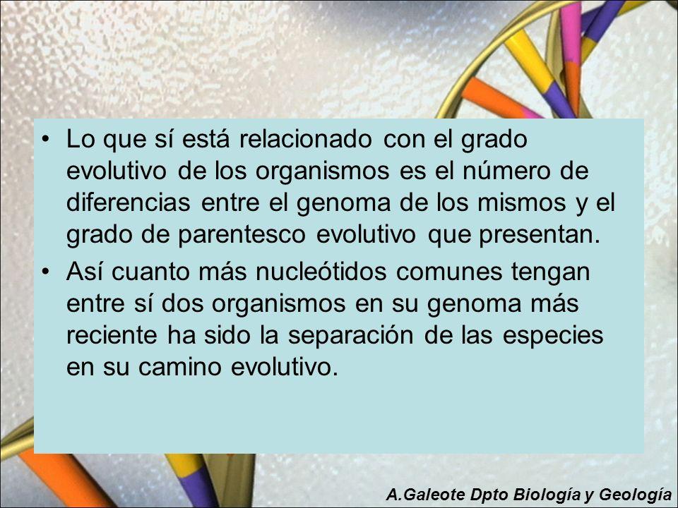 Lo que sí está relacionado con el grado evolutivo de los organismos es el número de diferencias entre el genoma de los mismos y el grado de parentesco