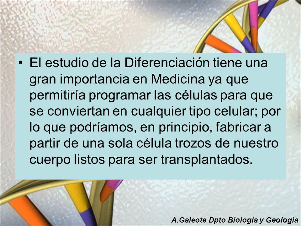 El estudio de la Diferenciación tiene una gran importancia en Medicina ya que permitiría programar las células para que se conviertan en cualquier tip