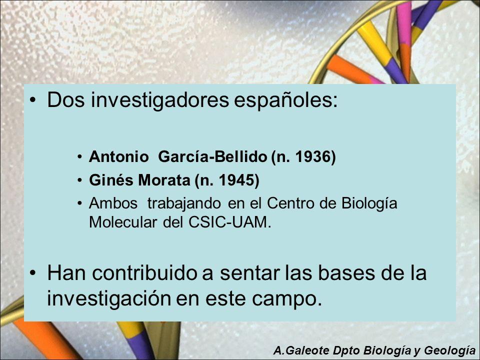 Dos investigadores españoles: Antonio García-Bellido (n. 1936) Ginés Morata (n. 1945) Ambos trabajando en el Centro de Biología Molecular del CSIC-UAM